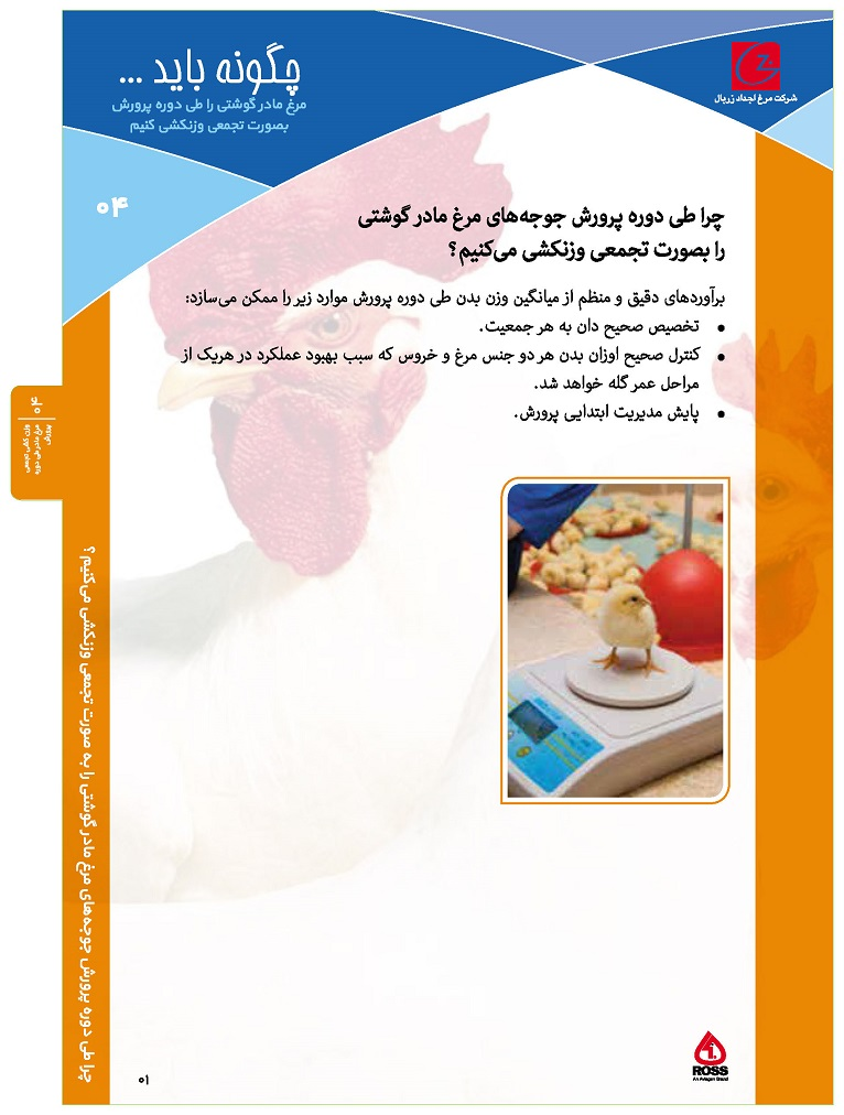 ۰۴- وزن کشی تجمعی مرغ مادر طی دوره پرورش_Page_1