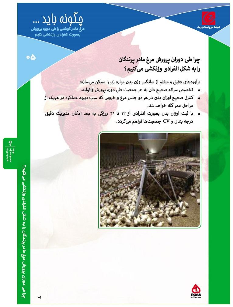 ۰۵- وزنکشی انفرادی مرغ مادر طی دوره پرورش_Page_1